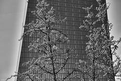 Frankfurt 1 (rainerneumann831) Tags: frankfurt ezb hochhaus bäume blau architektur blackwhite