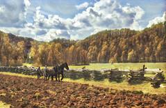 At Oconaluftee Center & Mountain Farm Museum, Great Smokies (Randy Durrum) Tags: plow plowing horses draft greatsmokies oconaluftee smokies tennessee prisma durrum samsung s6
