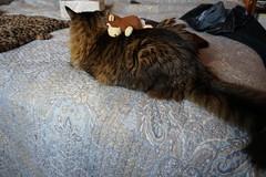 Monkey on cat's back (lancer.1) Tags: cats cat toys monkey