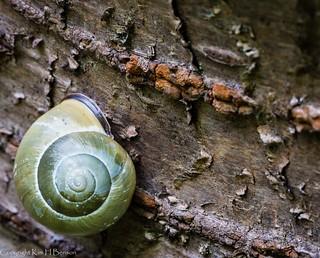 Snail on a slant