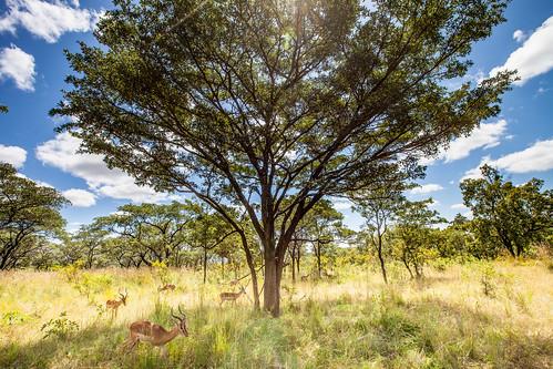 KrugerParkREIZ&HIGHRES-65