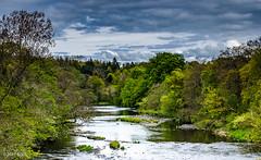 118 ~ 365 (BGDL) Tags: lightroomcc afsnikkor55200mm1456g bgdl landscape high5~365 nikond7000 riverayr auchincruive oswaldbridge woodlandsandforest