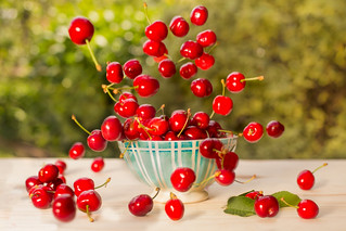 Flying cherries from Céret