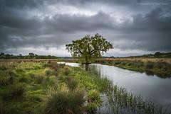 Eyebrook Reservoir (marc_leach) Tags: landscape lake eyebrook reservoir green grey grass trees water leicestershire rutland rural clouds nikon