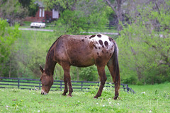 IMG_8368_01 (Sagrasa) Tags: churchilldowns kentucky horseracing thoroughbred