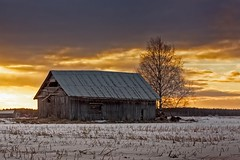 Evening Sky Over The Old Barn House (k009034) Tags: 500px sky sunset nature sun clouds tree snow evening birch fields countryside agriculture barn rural farming springtime no people finland tranquil scene copy space oulainen matkaniva teamcanon