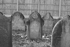 "Headstones moved in 2009 as a result of ""development"" (IanAWood) Tags: lbofbrent london londoncemeteries nikkorafs58mmf14g nikondf walkingwithmynikon willesden willesdenoldcemetery willesdenburialground"