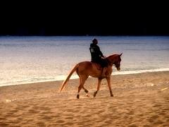 I cavalli ci prestano le ali che ci mancano. (TRICOR 46) Tags: cavallo spiaggia mare