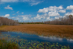 Grassy Waters (acarter5251) Tags: sky nature water grass florida lilly waters lillypads wetland pads grassy