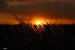 Sundown (ulykme) Tags: sunset sundown flare purplesun goldengrass