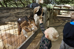 """Feeding the Goats • <a style=""""font-size:0.8em;"""" href=""""http://www.flickr.com/photos/94329335@N00/9002558273/"""" target=""""_blank"""">View on Flickr</a>"""
