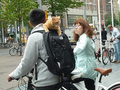 rode kater reist mee (JosDay) Tags: cat fun kat bikes backpack fietsen streetshot