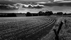 (Eric Goncalves) Tags: trees light sky nature clouds rural landscape nikon gloucestershire array nikond7000 ericgoncalves