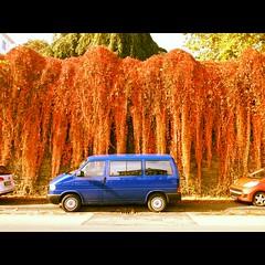 (ilana emer) Tags: auto blue autumn orange leaves car deutschland europe bonn herbst nrw blau nordrheinwestfalen bluecar bonngermany northrheinwestphalia