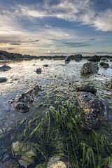 Seagrass (Mandlenkhosi) Tags: seagrass ayrshire dunure nikond800 nikonafsnikkor1635mm14gedvr