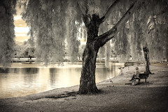 The Lady, the Willows and the Water (eCHstigma) Tags: california portrait woman canon landscape fishing candid fremont infrared 60d 40stm