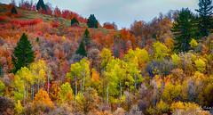 Maple grove Idaho (Pattys-photos) Tags: fall maple grove idaho