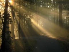 Sun beams (Gerhard111) Tags: netherlands herfst nederland sunbeams noordbrabant zonnestralen drunen baardwijkseoverlaat bestcapturesaoi elitegalleryaoi flickrsfinestimages1 flickrsfinestimages2