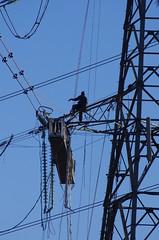 Climbing (yogi59) Tags: road men grid wire pylon cables national teesside overhead insulators grangetown lackenby platfom redcarandcleveland teessdock