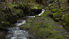 Silver Falls track
