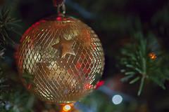 Gold | 355/365 2013 (mfhiatt) Tags: christmas winter tree ball gold star december bokeh ornament day355 day355365 3652013 mfhiatt 365the2013edition 2013michaelfhiatt 21dec13 img40821213jpg