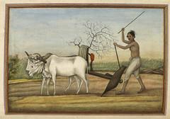 Anglų lietuvių žodynas. Žodis agriculturist reiškia n agronomas lietuviškai.