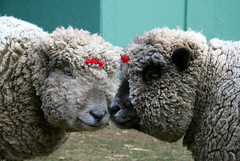 Wool Ewe Be Mine ? (aprilamb) Tags: {vision}:{outdoor}=099 {vision}:{mountain}=0692