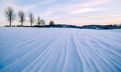Snow groves (tods_photo) Tags: ifttt 500px snow tracks tree trees cold winter sunset red ice sky clouds blue sun white light