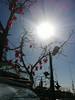 Flower Shop (kutzz) Tags: istanbul turkey bosforus sofia ayasofya sultanahmet bluemosque minaret mullah bosphorus goldenhorn fatih galata karakoy kadykoy besctash sisli qızqalası maidentower koska burek simit