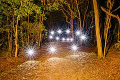 Starburst Spiral (stephenk1977) Tags: australia queensland qld brisbane alderley banks st street reserve wood woodland forest park night ledlenser p72 starburst light painting art nikon d3300