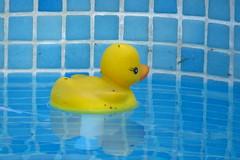 Sweet little Rubber Ducky (Deida 1) Tags: swimmingpool rubberduck yellow