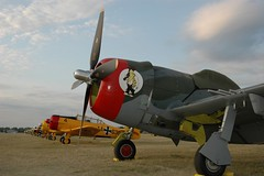"P-47D 1 • <a style=""font-size:0.8em;"" href=""http://www.flickr.com/photos/81723459@N04/33064323134/"" target=""_blank"">View on Flickr</a>"