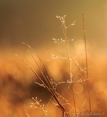 Früh morgens (Re Ca) Tags: sonnenaufgang autumn sunrise herbst morgentau closeup makro goldenestunde goldenhour sigma105mm canon eos70d