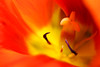 Heart of Fire (Liam J. Turner - British Photography) Tags: flowerz flowahs flowerrasd dfgop tsdfgtnmjpiosdftrnmjwopejtmr so0dtkrd tgkdfyo0g cock doodle doo boyeeeeeee flowers flower pretty colourful macro digital close up biology science magical mysterious godzilla dove heart fire