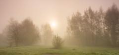 April Dawn At Attenborough (Julian Barker) Tags: attenborough nature reserve nottingham fog mist poplars sunrise dawn neutral density graduated filters goo bad julian barker canon dslr uk england