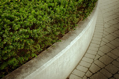 a fine shrubbery (Mike_Rocha) Tags: shrubbery curves simple