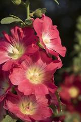 0F1A0568 (Liaqat Ali Vance) Tags: flower beautiful nature google liaqat ali vance photography lawrence garden lahore punjab pakistan