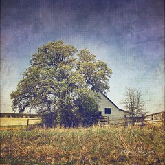 This old barn. Processed with #stackablesapp #stackables (peppermcc) Tags: stackablesapp stackables