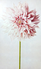 Dalia rosa - Pink dahlia 2017 (Margherita Piva art) Tags: pittura acrylic acrilico flower fiore dhalia dalia rosa pink nature natura legno painting artist margherita piva arte art