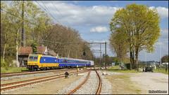 19 april 2017 - NS 186 117 - Maarn Goederen (EnricoSchreurs) Tags: ns nederlandse spoorwegen br186 traxx 186 117 239 sr10 sr11 sr12 28400 koninklijke trein royal train zug railway spoor track maarn goederen april 2017 canon eos 6d