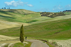 Val d'Orcia landscape (Darea62) Tags: valdorcia landscape nature agriculture tuscany hills cypress grass panorama clouds photographer sigma