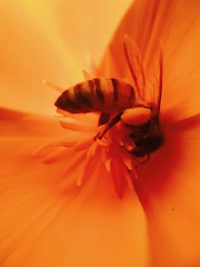 Macro (pandeesh89) Tags: colorful art insects beemacro flower iphone7 apple photos iphone macrolens moment