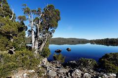 20170301-01-Lake Fanny morning reflections (Roger T Wong) Tags: australia greatpinetier lakefanny np nationalpark sel1635z sony1635 sonya7ii sonyalpha7ii sonyfe1635mmf4zaosscarlzeissvariotessart sonyilce7m2 tasmania wha wallsofjerusalem worldheritagearea bushwalk camp hike morning reflections trektramp walk water