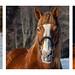 Harpswell Horses
