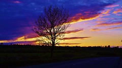 Broad skies (Sundornvic) Tags: sunset sky light sun colour clouds bright shadows shropshire