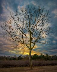 Pleasant Exposure - 2017-03-17_04 (Paul and Nalva) Tags: nx500 samsungnx500 rokinon12mmf2 garrardlandingpark roswellga sunrise sunset tree flp