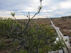 Stora Mosse in March 2017 (Småland Outdoor) Tags: dayhike hike hiking hiker osprey poco plus stora mosse national park mire bog peat