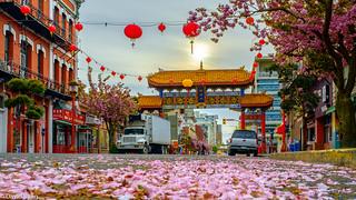 Chinatown, Victoria, Saturday Morning