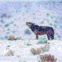 33543841313_dbf158e87e.jpg (amwtony) Tags: 33969899700da444aaf75jpg nature snow animals outdoors 343129973562f3e7b0045jpg 34223478771876be3d2c1jpg 339702209604f465a571ajpg 34354464455dd671ac276jpg