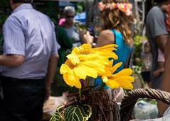Breezy Yellow (andressierra2) Tags: nikon yellow lightroom flowers breezy nikond3300 50mm